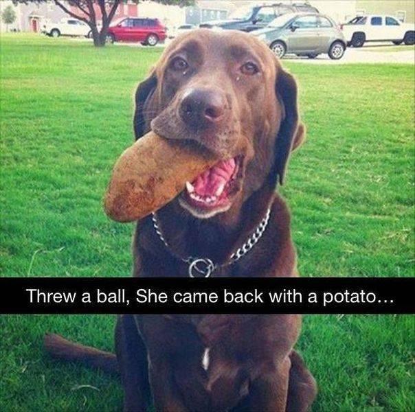 She's a retriever, not a genius.