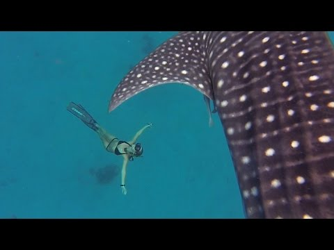 GoPro Awards: Ocean Ramsey and a Whale Shark – YouTube