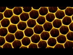 Why do bees build hexagonal honeycombs? – Forces of Nature with Brian Cox: Episode 1 &#821 ...