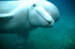 Why This Video Of A Beluga Whale 'Playing' With Children Is Actually Very Sad
