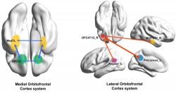 """Scientists Find The """"Physical Source"""" Of Depression 