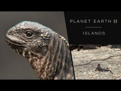 Iguana chased by snakes – Planet Earth II: Islands – BBC One – YouTube