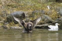 The Hilarious Winners Of The Comedy Wildlife Photo Awards 2016 | IFLScience