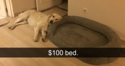 15+ Hilarious Dog Snapchats That Are Impawsible Not To Laugh At | Bored Panda
