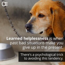 Learned Helplessness Makes You Give Up In The Face Of Adversity. Good News: It Can Be Fixed.