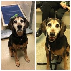 Before & After adoption, old girls 2nd chance