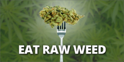 Report: Eating Raw Weed Prevents Bowel Cancer, Fibromyalgia and Neuro-degenerative Diseases &#82 ...