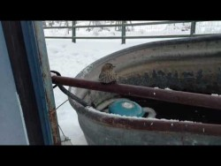 Sparrow Frozen to Fence Rescue – YouTube