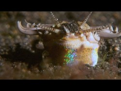 This Terrifying Worm Snatches Fish from the Ocean Floor – YouTube