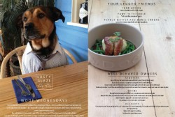 Pamper your pooch as Cornwall restaurant launches three-course dinners for dogs