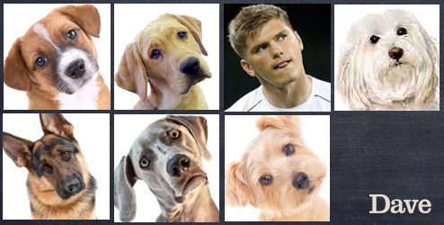 """Dave on Twitter: """"To celebrate the return of the #SixNations we got some dogs to give us t ..."""