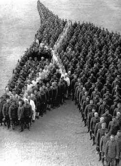 Soldiers pay moving tribute to 8 million horses, donkeys, and mules who died during the First Wo ...