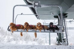 Ski patrol doggos reporting for duty