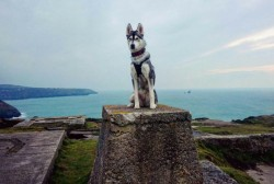The best dog-friendly days out in Cornwall that we bet you didn't know about   Cornwall Live