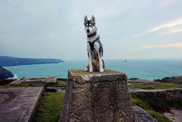 The best dog-friendly days out in Cornwall that we bet you didn't know about | Cornwall Live