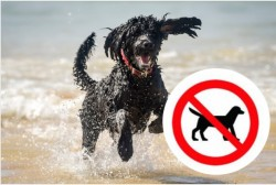 The 88 Cornwall beaches where you'll be banned from taking your dogs from Easter | Cornwal ...