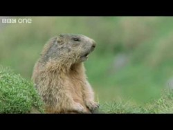 Funny Talking Animals – Walk On The Wild Side Preview – BBC One – YouTube