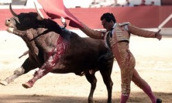 Spanish matador dies after being gored during bullfight | World news | The Guardian