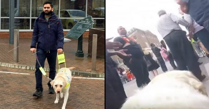 Blind Man Straps Camera To Guide Dog's Back. When Wife Sees Video Later She's Horrified