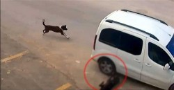 Driver fined 1,097 Turkish Liras for hitting and killing stray dog – ANIMALS