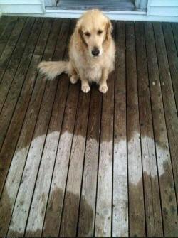 Somebody fell asleep in the rain