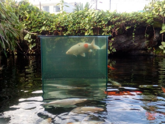 "This ""water box"" that allows the fish to swim above the water level"