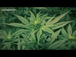 The Most Powerful Plant on Earth? | The Hemp Conspiracy | Documentary – YouTube