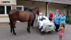 This was the heartwarming moment a man on his deathbed got his dying wish – to feed a hors ...
