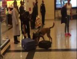 Turkish police use dogs to search luggage of German passengers in Istanbul