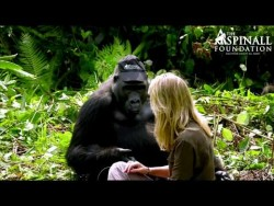 Heart-warming moment Damian Aspinall's wife Victoria is accepted by wild gorillas OFFICIAL ...