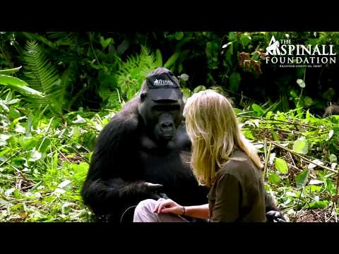Heart-warming moment Damian Aspinall's wife Victoria is accepted by wild gorillas OFFICIAL VIDEO – YouTube