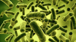 The Fascinating Link Between Gut Health and Cancer Treatment