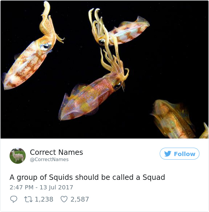 This Twitter Account Is Renaming Everyday Objects And They're More Accurate Than The Real Ones | ...