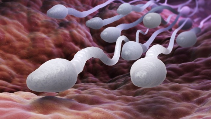 Sperm May Be Uniquely Equipped to Deliver Chemo to Cervical Cancer | Big Think