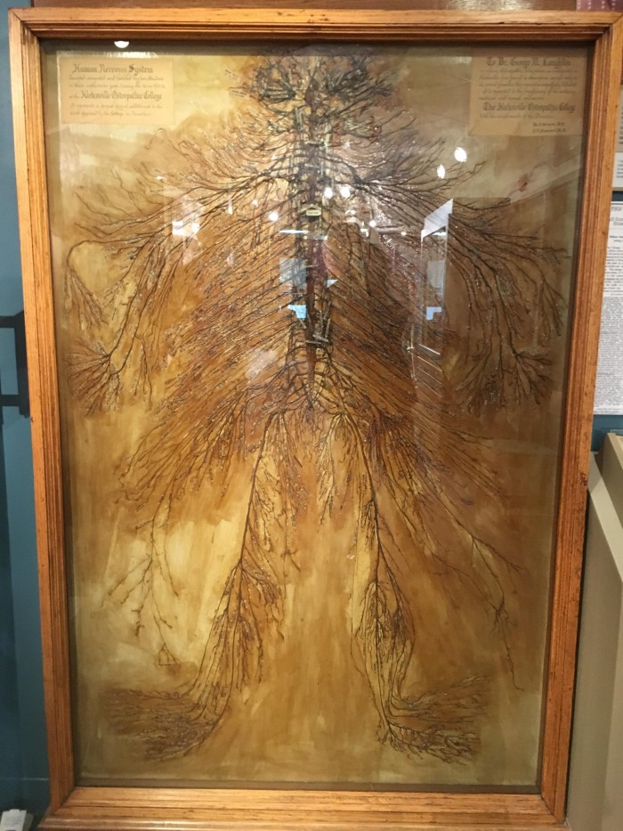 This is an intact human nervous system that was dissected by 2 medical students in 1925. It took ...