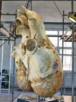 A whale's heart