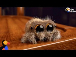 Lucas The Spider Creator Explains How He Makes People Fall In Love With Spiders | The Dodo ̵ ...