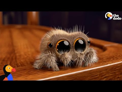 Lucas The Spider Creator Explains How He Makes People Fall In Love With Spiders | The Dodo – YouTube