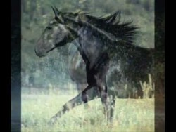 Theme from Black Beauty (Galloping Home) – Matt Pop Mix, unofficial – YouTube