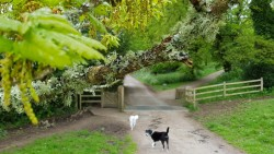 Doggos favourite, Trelissick Park