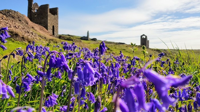 Bluebells and tin mines