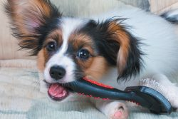 The Shaved Dog Dilemma — Should You Ever Shave a Dog?