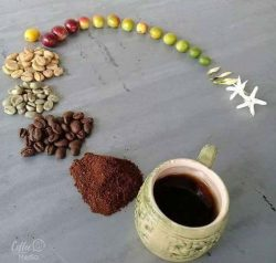 Coffees lifecycle