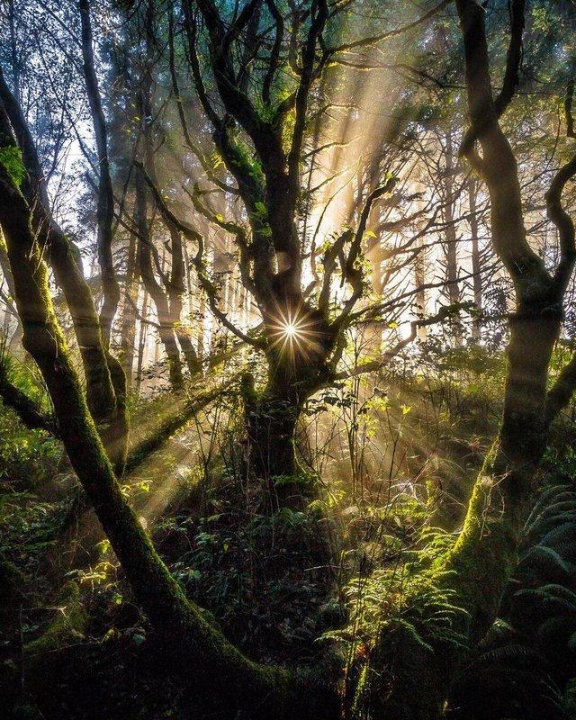 A light pierced through. Cape Perpetua, Oregon, USA