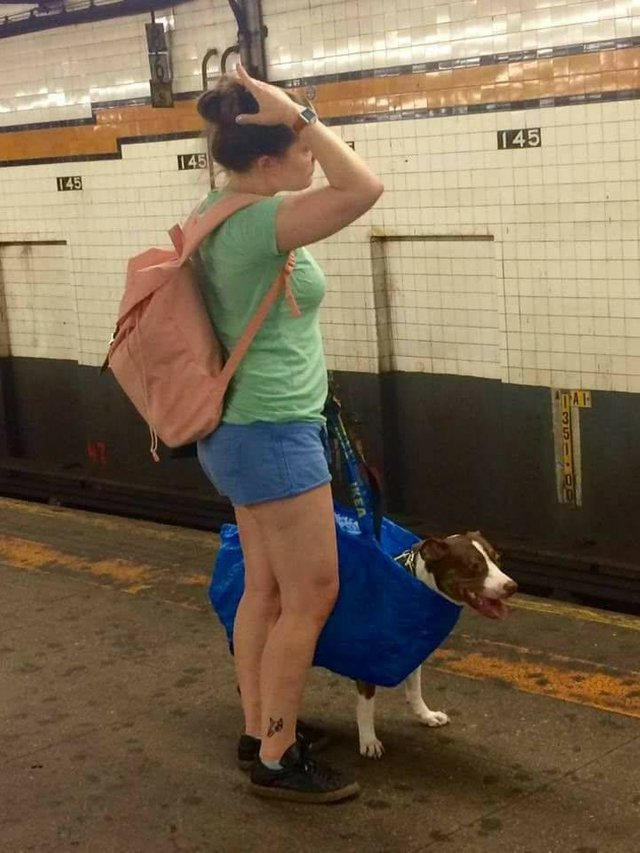 They banned dogs on the subway unless they can fit in a bag…