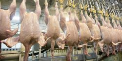 UK to accept chicken washed in chlorine, and beef and pork fed with growth-promoting hormones am ...