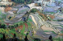 Terrace Farms, China