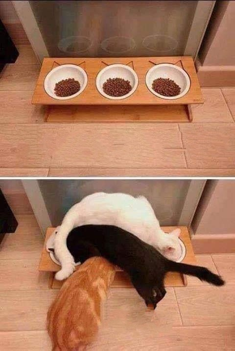 Trying to make life easier for cats