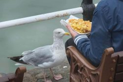 Staring down seagulls can stop them stealing your chips