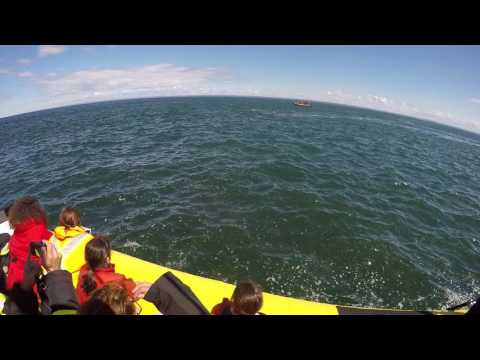 What Happens When a Giant Whale Almost Eats Your Boat
